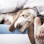Où faire dormir son chien ?