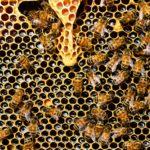 Quelles sont les étapes de la fabrication du miel?